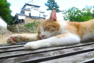 猫城主さんじゅーろー